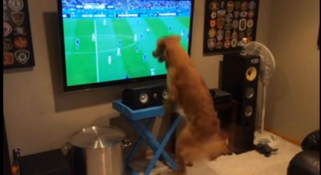 Cão assistindo Copa do Mundo