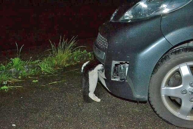 Gato sobrevive após ser atingido por carro a 113 km/h