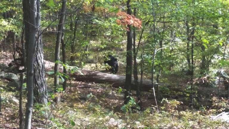 Estudante tira foto de urso que o matou