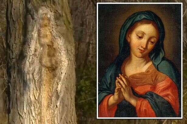 Imagem da Virgem Maria aparece em árvore