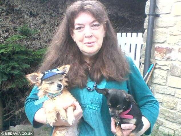 Mulher gasta 1.200 reais por semana mimando cãezinhos de estimação