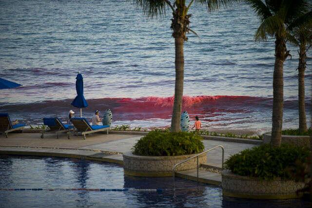 Mar fica vermelho e intriga hóspedes de Resort