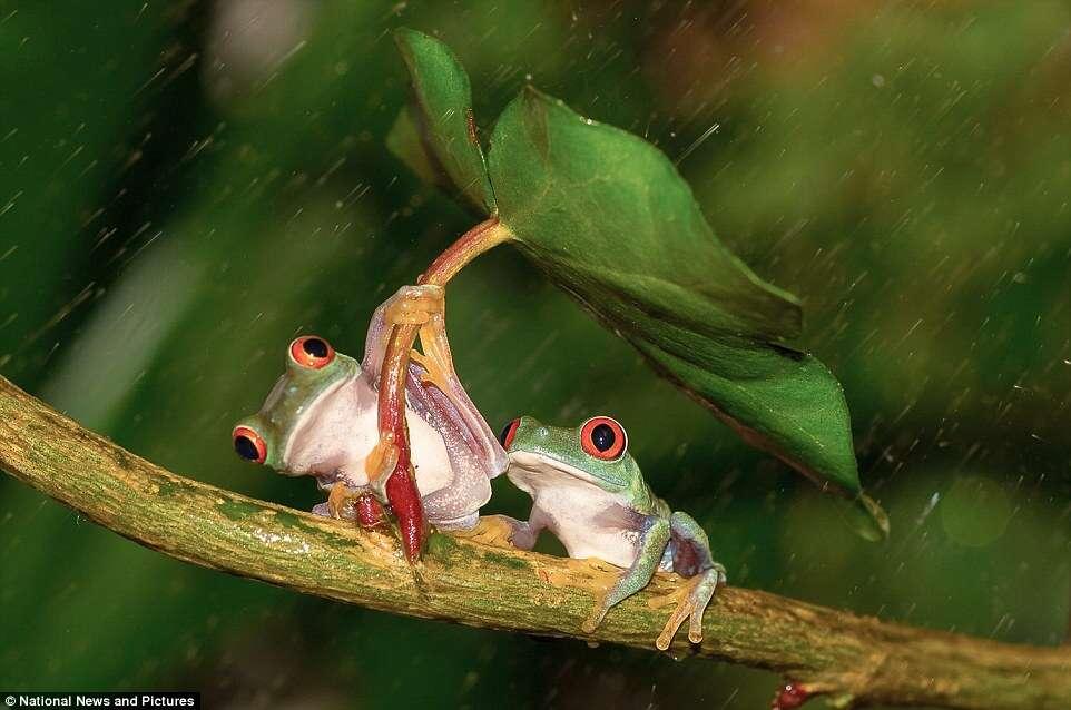 Evento reúne as principais fotografias capturadas na natureza neste ano