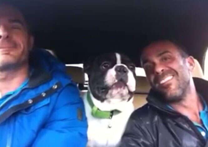 Vídeo de Bulldog cantando ao lado dos donos bomba na internet