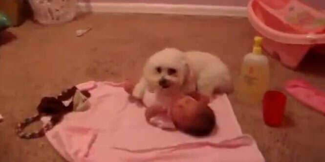 Imagem linda de cão abraçando bebê recém-nascido bomba na internet