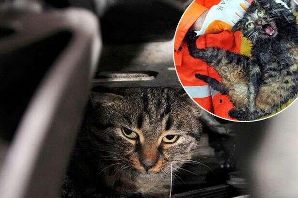 Gato mal-humorado se recusa a sair de motor de carro
