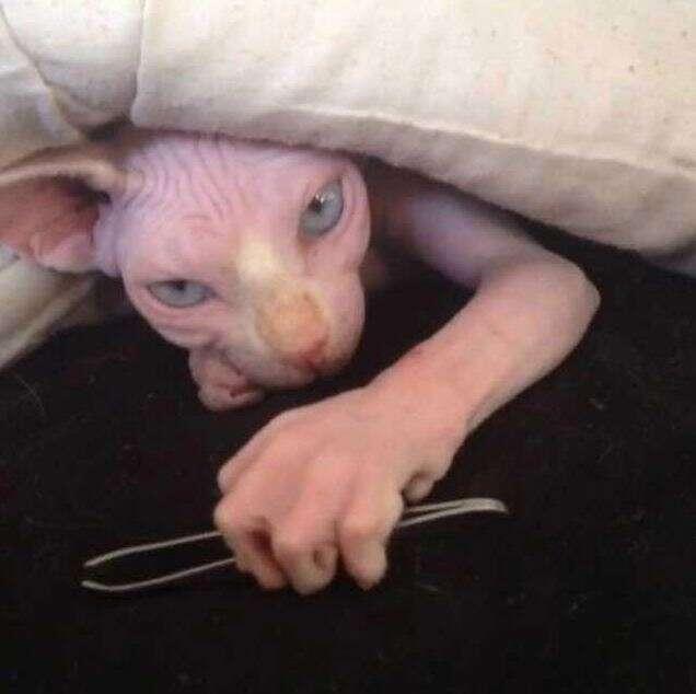 Imagem de gato com mão humana causa repercussão na web