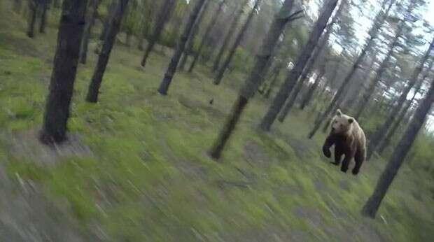 Enorme urso persegue ciclista em floresta nos Estados Unidos