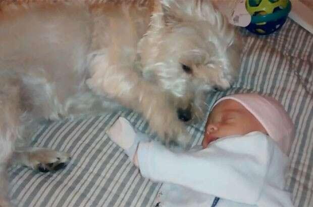 Cadelinha é extremamente carinhosa ao conhecer bebê de seus proprietários