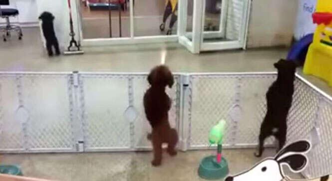 Cão dançando