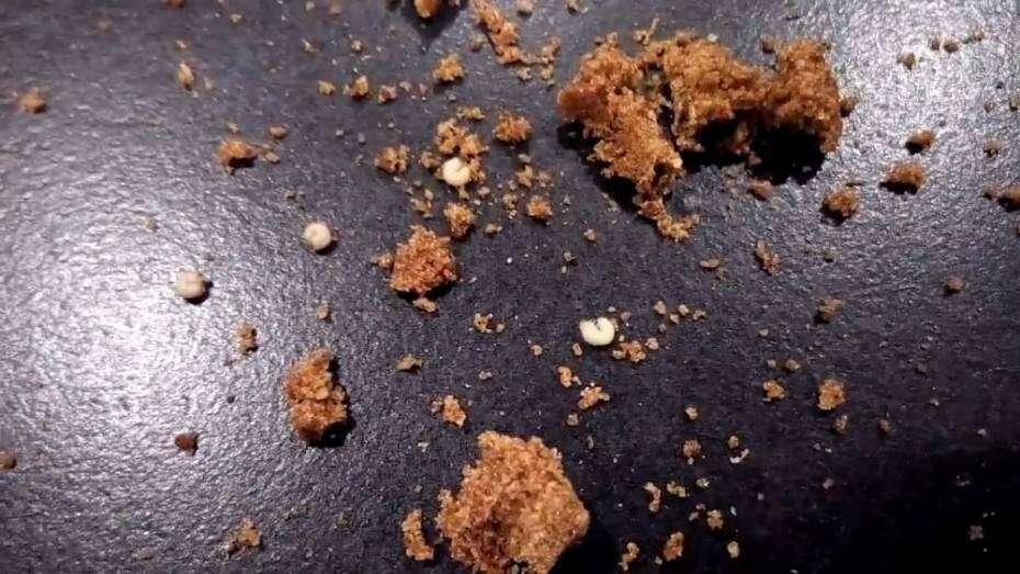 Casal encontra larvas vivas dentro de cubos de tempero
