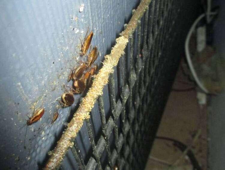 Restaurante é fechado após inspetor encontrar baratas e fezes de ratos na cozinha do local