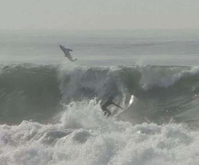 Surfista realiza manobras ao lado de tubarão