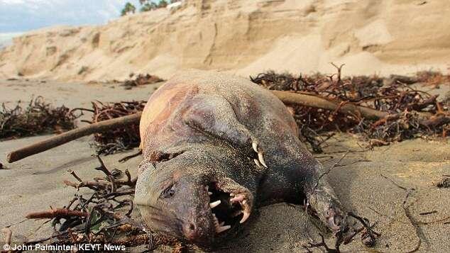 Criatura misteriosa aparece em praia na Califórnia