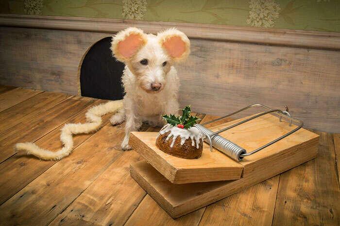 Fotógrafo transforma seu cachorro em outros animais