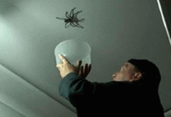 Os vídeos mais aterrorizantes de aranhas em 2014