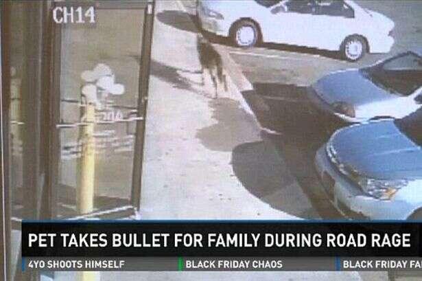 Cão herói salta na frente de bala disparada por bandido em direção a família e morre