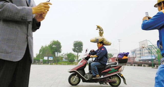 Homem transporta sacos de areia e cão sobre a cabeça