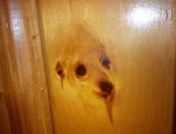 Imagem de cão surge em pedaço de madeira e repercute na web