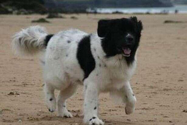 Conheça o cão mais azarado do mundo
