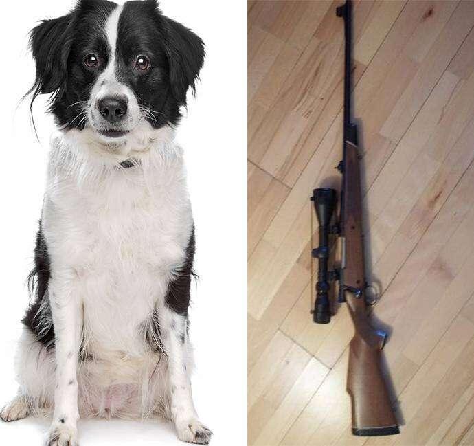 Cão atira no proprietário em passeio de carro