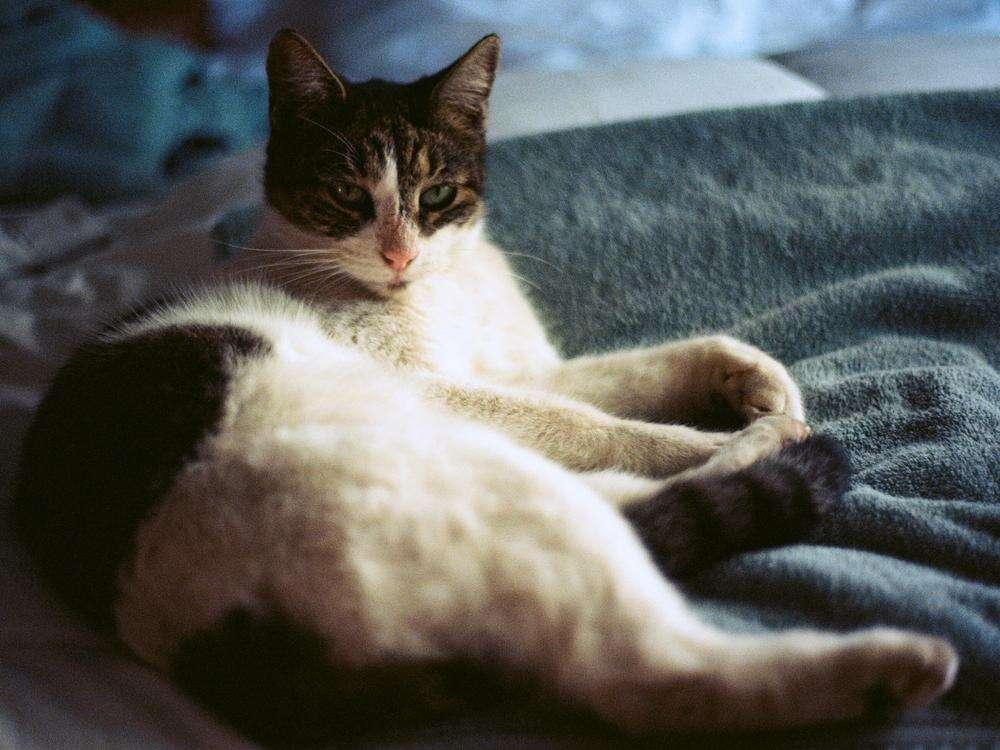 Mulher se casa com gatos de estimação