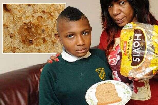 Família encontra aranha morta dentro de embalagem de pão