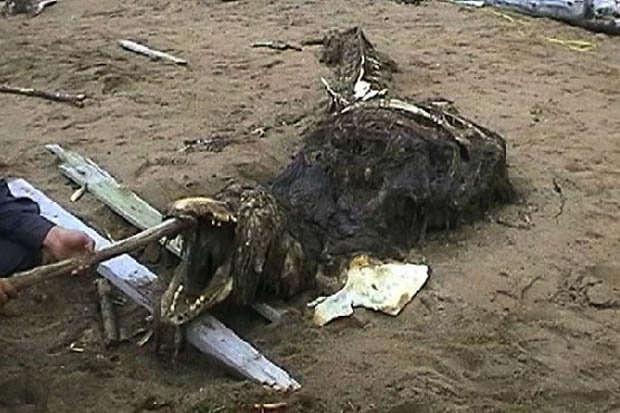 Criatura misteriosa é encontrada na Rússia