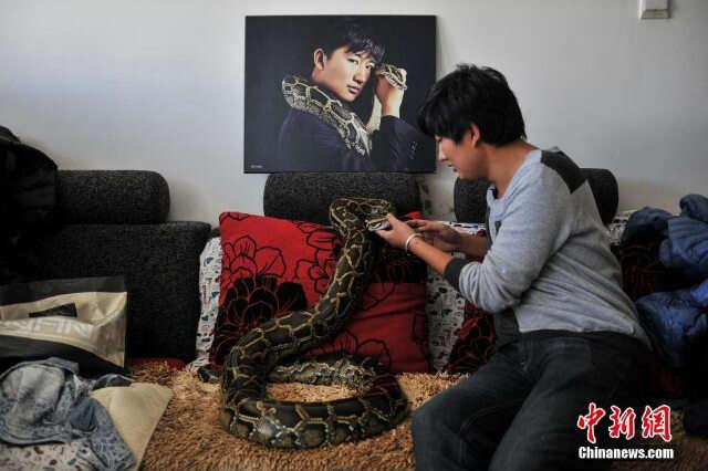 Conheça o jovem que compartilha sua casa com 25 cobras