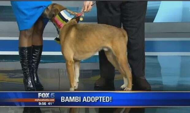 Cão levanta saia de apresentadora de TV ao vivo