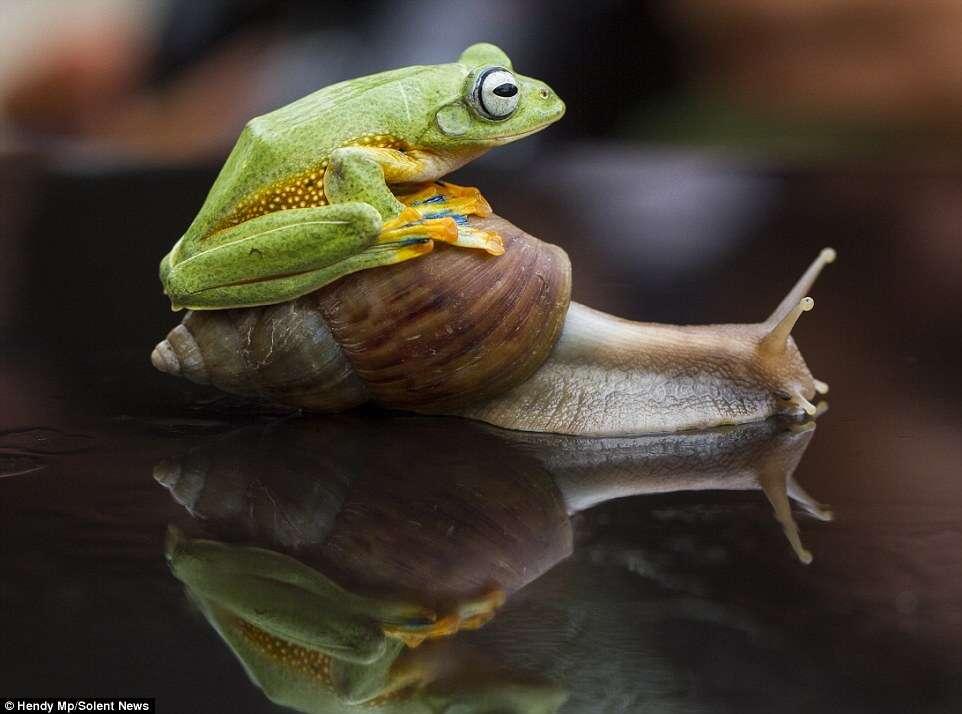 Amizade entre rã e caracol chama a atenção de internaurtas