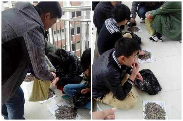 Professor causou polêmica ao punir alunos forçando-os a comer 50 quilos de sementes