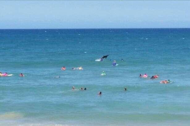 Tubarão salta no meio de banhistas em praia