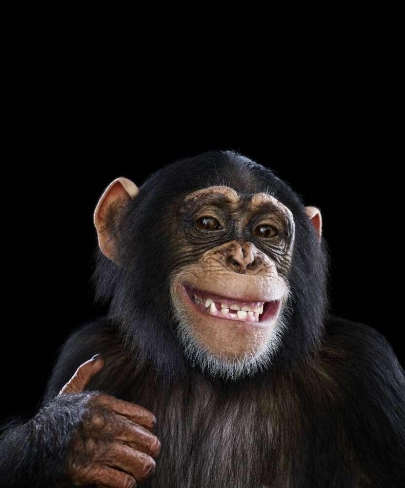 Cientistas afirmam que omor humano pelo álcool vem dos macacos