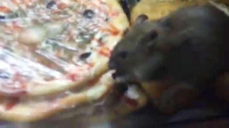 Mulher filma ratos caminhando e se alimentando em lanchonete