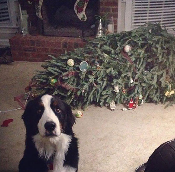 Bichinhos de estimação destroem o Natal