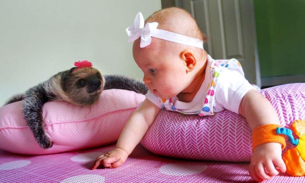 Amizade entre bebê e bicho preguiça chama atenção na web