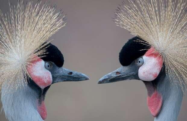 Pássaros são fotografados dando encarada