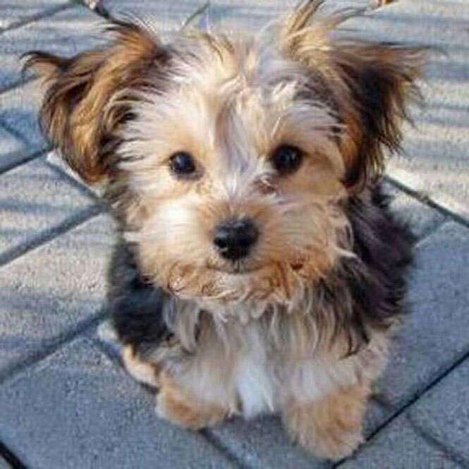 Fotos mostram os mais bonitos cães frutos de mistura de raças