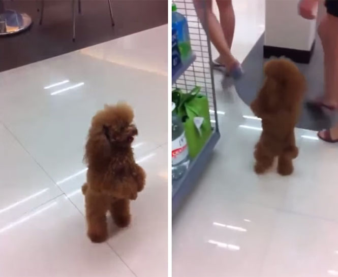 Cão de pé em supermercado