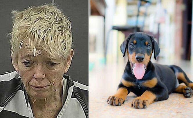 Após ser proibida de levar cãozinho em avião, mulher afoga o filhote no banheiro de aeroporto