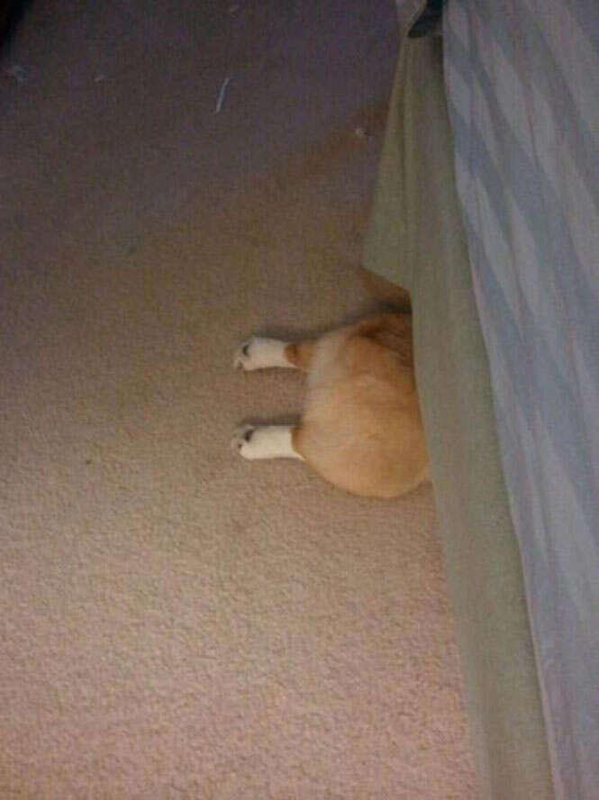 Cão se escondendo