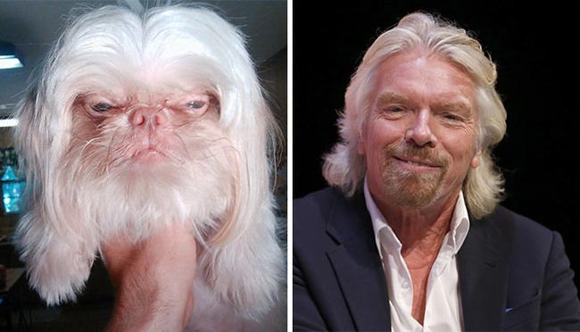 Imagens de cães parecidos com famosos