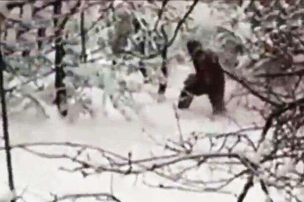 Vídeo causa repercussão ao flagrar enorme criatura caminhando em floresta na Rússia