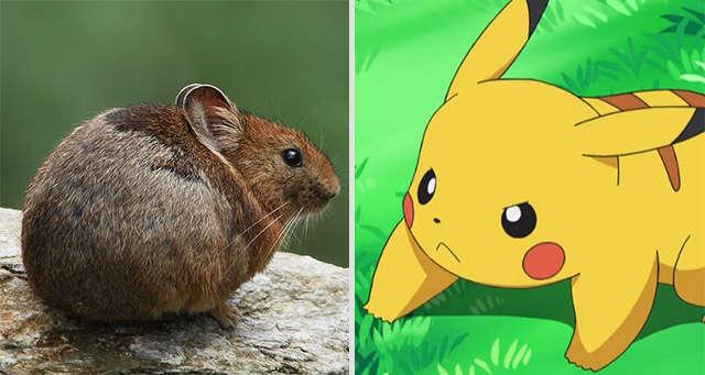 China é criticada por tentar acabar com a população de Pikachu
