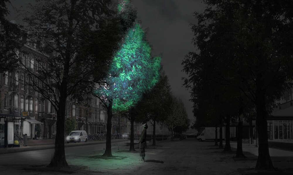 Em breve árvores que brilham no escuro podem substituir a iluminação pública