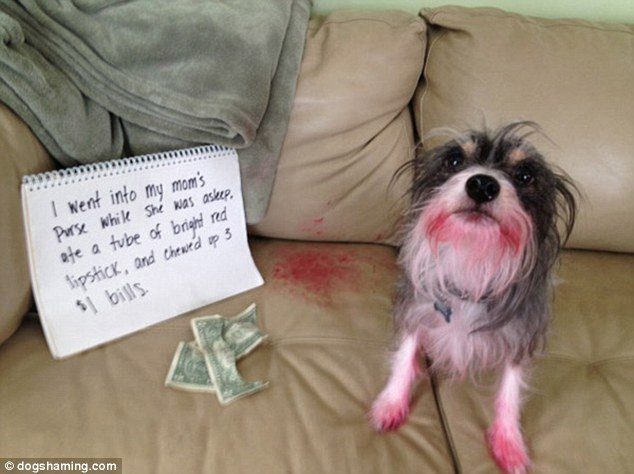 Cães bagunceiros com olhar de piedade para escaparem de punição fazem sucesso na web