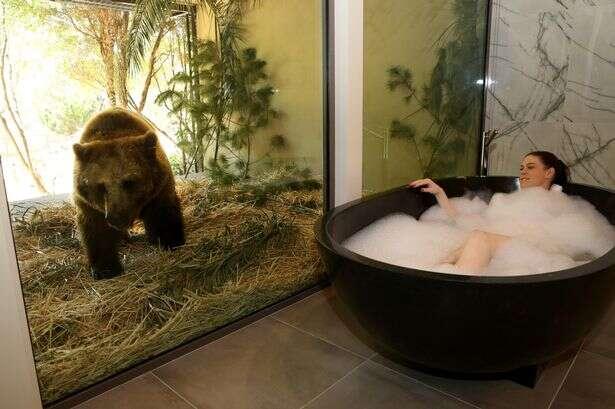 Hotel permite que hóspedes convivam ao lado de animais selvagens