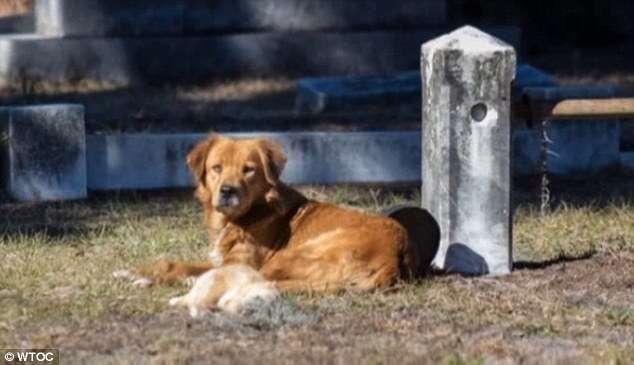 Cadela se recusa a deixar local onde seu filhote foi enterrado