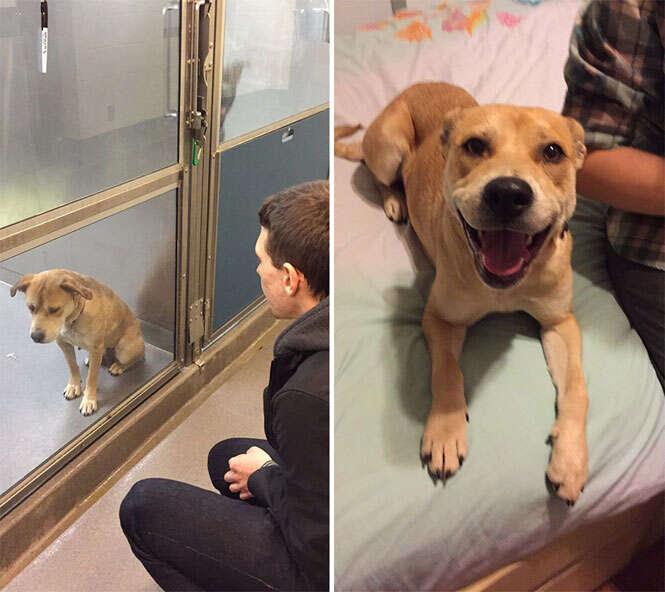 Animais antes e depois da adoção